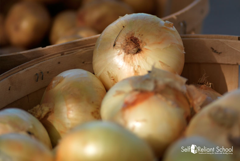 Preserve Onions for Survival to Grow and Harvest